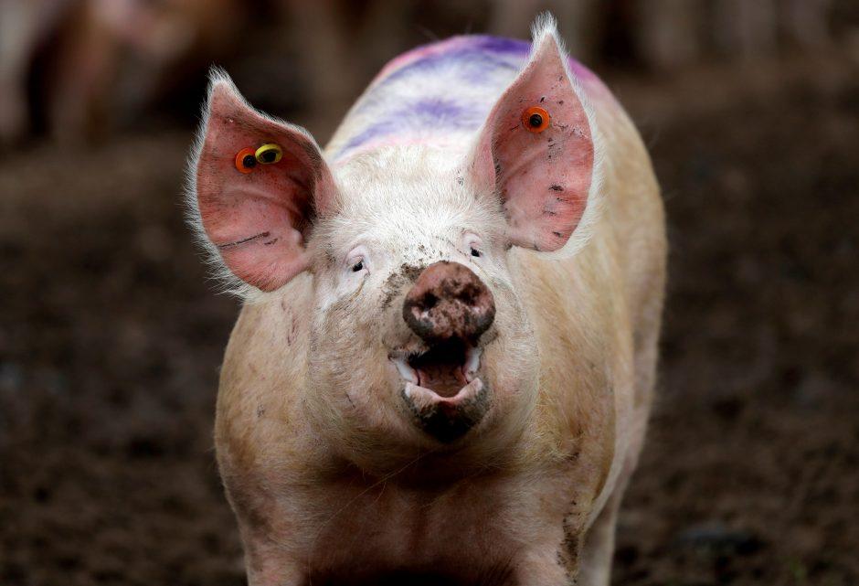 3 mažų kiaulių prekybos sistema nuosavybės išvestinių vertybinių popierių pasirinkimo sandoriai