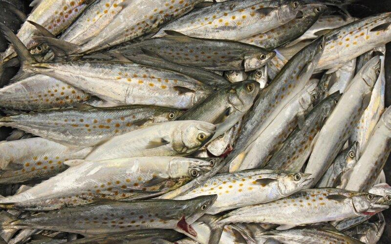 jūrų žuvų prekybos sistema